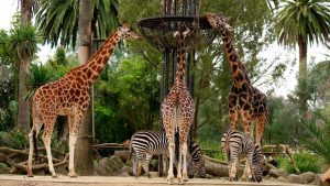10 World Is Oldest Zoos You Should Visit