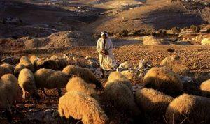 Kisah Khalifah Umar bin Khattab dan Penggembala Kambing