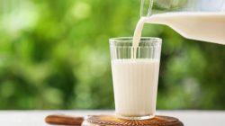Tips Menaikan Berat Badan Dengan Susu Dancow Dewasa